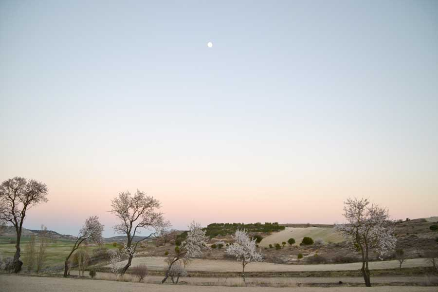 finca-el-cercado-almendros-en-flor-2017 (3)