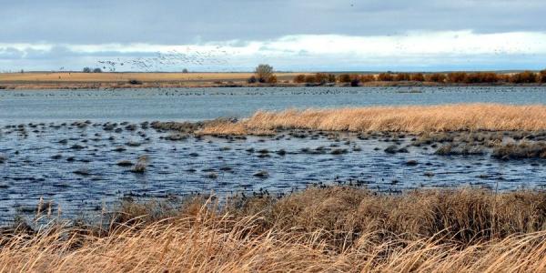 Laguna de la Nava